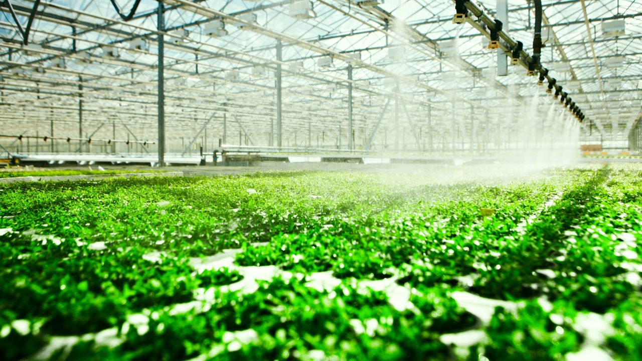 Hydroponic System: Plants That Can Grow Without Soil and Its Benefits