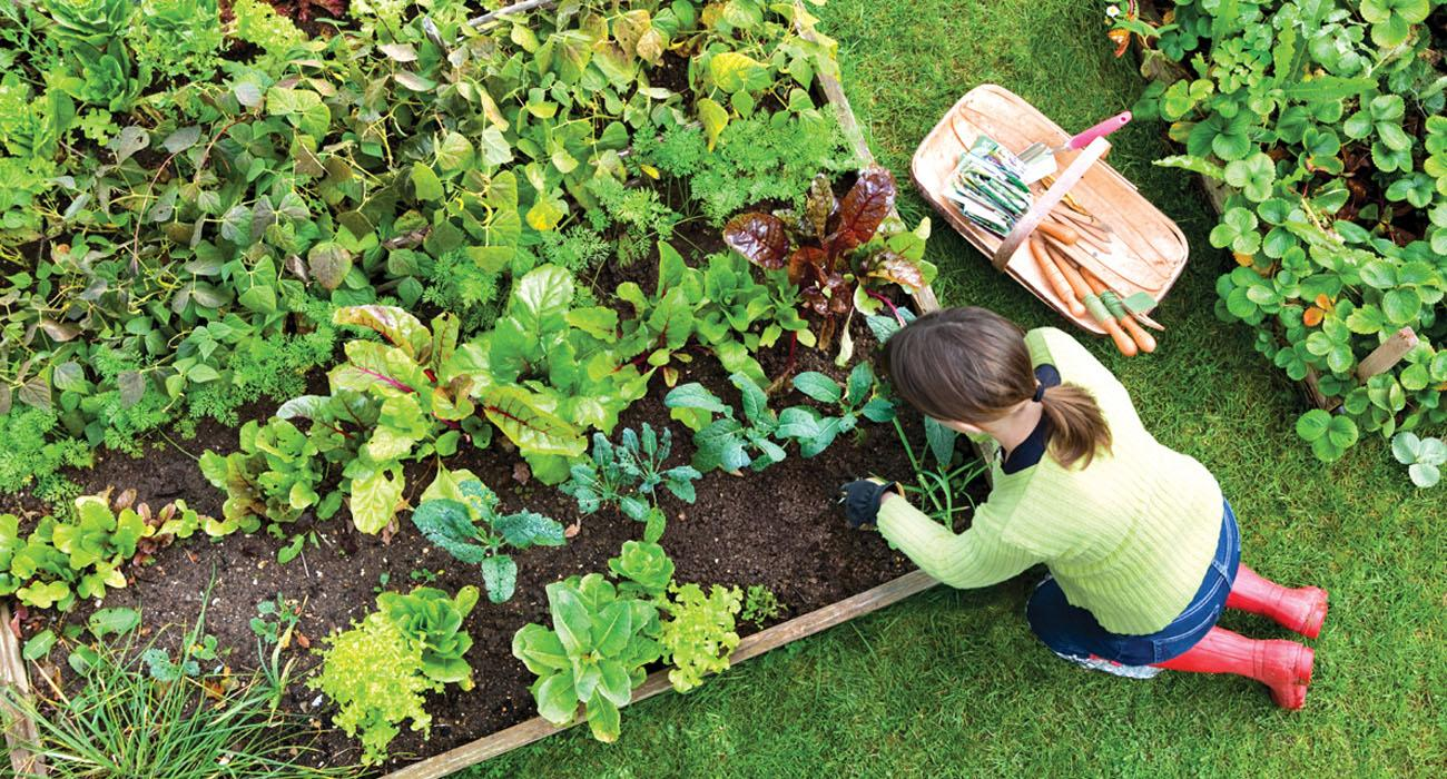 Tips to Plant a Vegetable Garden at Home