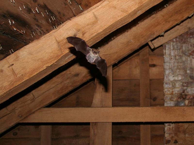 Why to Take Professional Attic Removal Help?