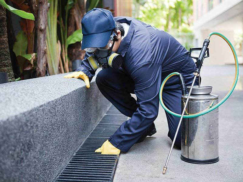 Compelling Reasons To Hire A Professional Pest Control Company