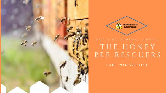 6 Incredible Benefits Of Hiring A Professional Honey Bee Removal Service