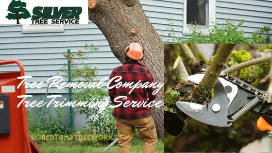 Planning To Hire Tree Removal Service? Mind These Questions!