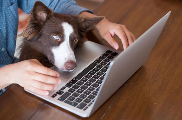 Amazing Tricks To Get The Most Out Of Your Pet Food Online