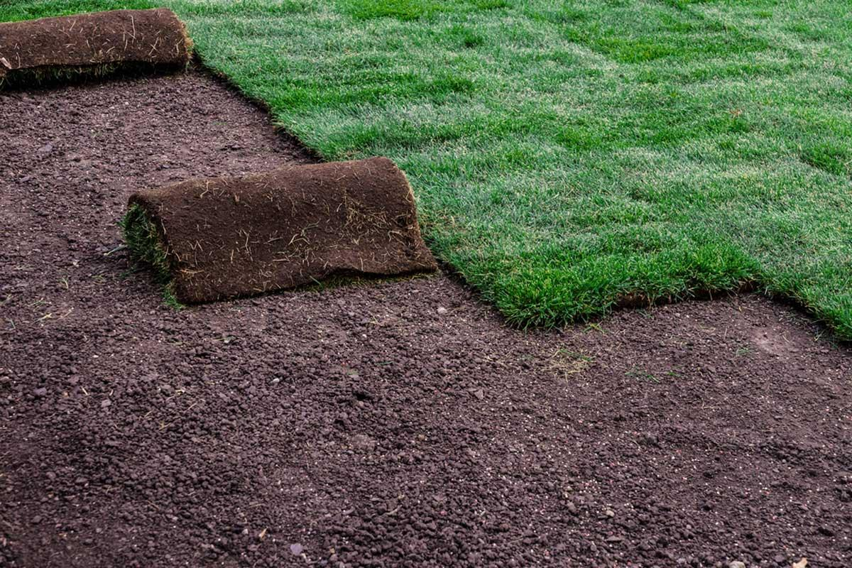 Lawn And Garden Near Me >> Reasons Why You Need To Try To Find Sod Near Me
