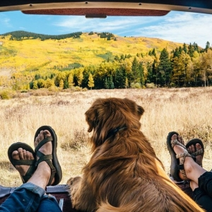 Things to Consider Before You Plan to Travel with Your Pet