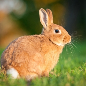 Pet Care: Hutches and Food for Rabbit