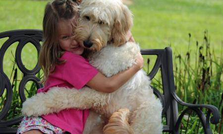 Dog Companionship is More than a Friend to Humans
