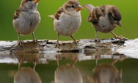 Reasons behind the downturn of Sparrows