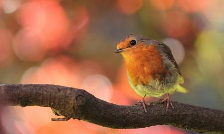 Bright & colorful birds that makes great addition to family
