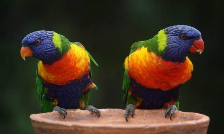 Things You should Know about Parrots