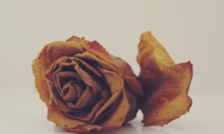 7 Creative Things To Do With With Withered Flowers