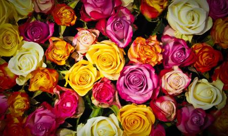 6 Rose Color Meanings To Help You Pick The Perfect Bouquet