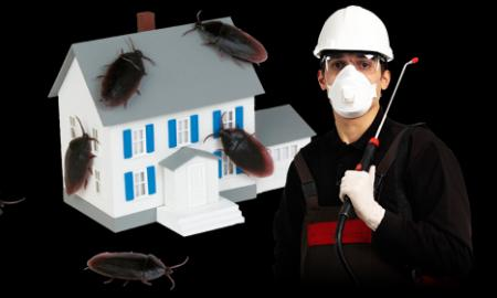 This Is What You Can Expect From Pest Control Companies