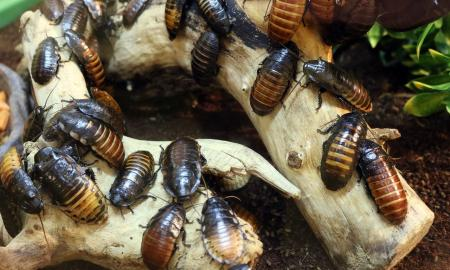 6 Unbelievable Tips To Avoid Termite Problems In The House
