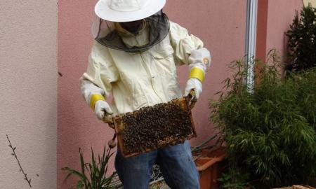 Steps To Remove A Beehive Safely From A Wall