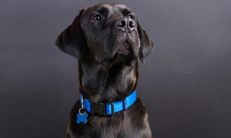 Best GPS Dog Collars  Brands Features Reviews 2020